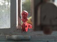 Regula Ehrliholzer Fenster Cosimo